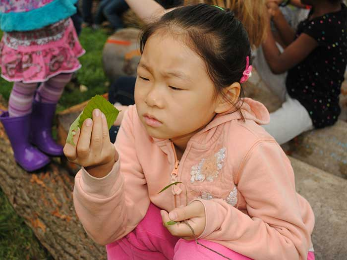field education session, child inspecting a leaf